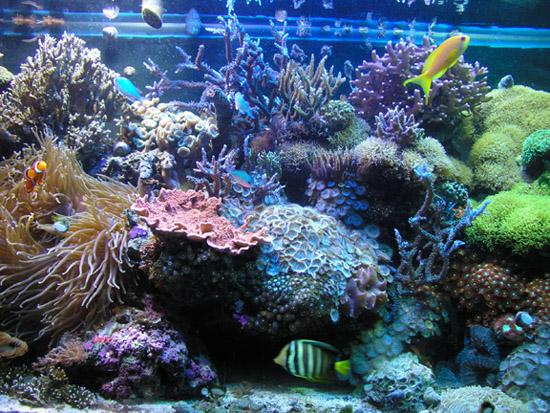Coral Morphologic Part 1 90 Gallon Caribbean Reef