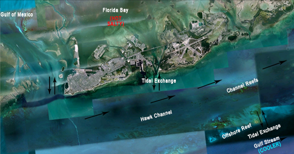 Florida Keys hydrology_bleaching 2014